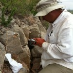 Collecting rock chip 
